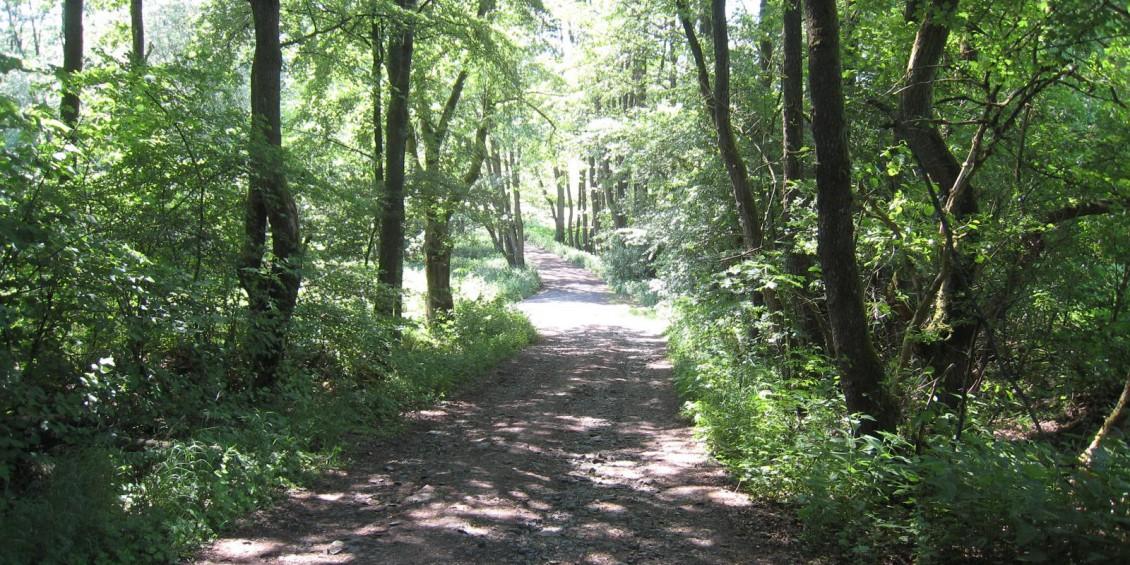 Strecke  Ulmbach Sarrod 12 Km 007